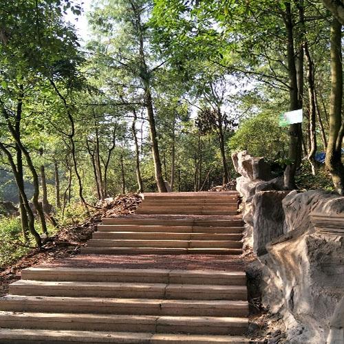 南川长青森林公园康养环境
